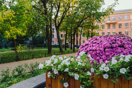 A large flowerbed made of purple flowers. Beautiful well-groomed garden with purple and white flowers.