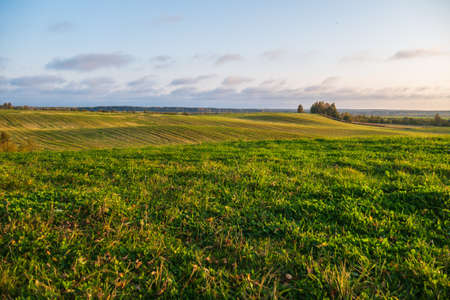 A huge green field with grass and wheat. Small hills and trees in the distance. A big beautiful blue sky. Stock fotó