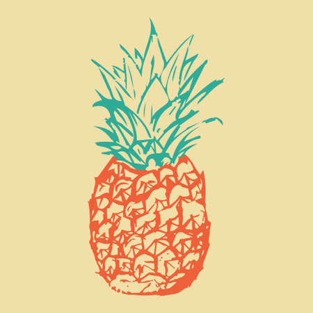 A drawing of a pineapple made by hand. Pineapple drawn with pen and pencil. Vector illustrator. Vector Illustration