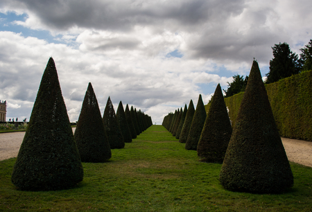 louis the rich heritage: Conical Bushes in Green Versailles Garden under Blue  Sky Stock Photo