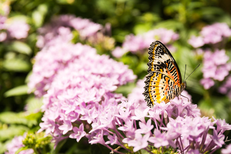 Butterfly Large Wings Sitting on Flower Leaves Petals Bush Insect Beautiful Stock Photo