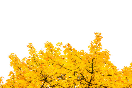 rule of thirds: Autumn Fall Season Seasonal Leaves Changing Yellow Background Detail Texture Isolated White Orange Green Red Oak Tree