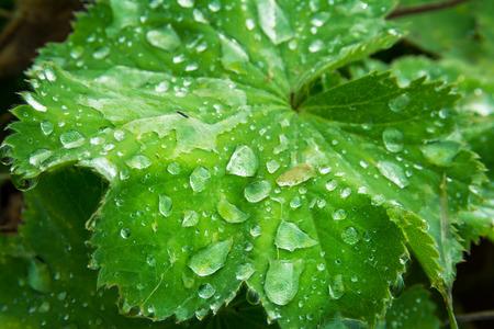 underbrush: Water Droplet Bright Green Leaf Macro Shrub Ground Plant Organic Bush Weeds Lake Shore Raindrops Detail Closeup Shining Reflective Surface