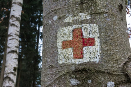 face in tree bark: Medical Red Cross Emergency Symbol Painted on Tree Trunk Forest Park