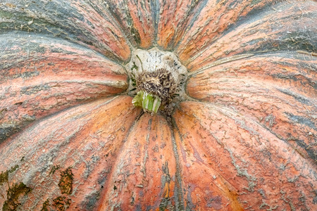 Massive Pumpkin Top Closeup Texture Background Orange Farming Organic Plant Vegetable Stock Photo