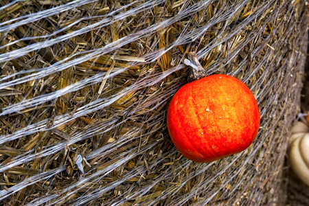 Pumpkin Orange Attached Haybale Closeup Background Texture Decoration Autumn Fall Single