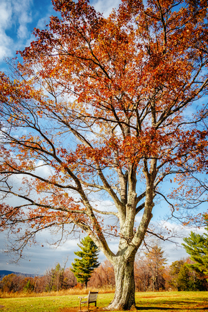 Bright Yellow Autumn Tree Alone on River Field Blue Skies Dramatic Nature Imagery