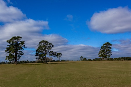 Grassy Field Natural Landscape Blue Sky Scattered Trees Farmland Clouds Daytime