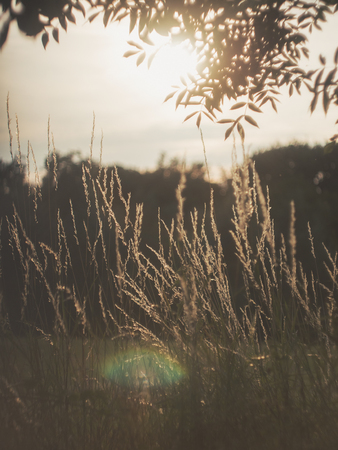 Shallow Depth of Field Grassy Path Nature Plants Outdoors Rural Area Detail