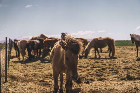 Highlands Horse Closeup Head Detail Brown Hair Windy