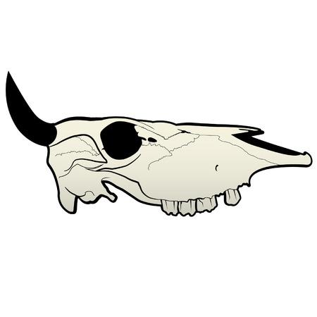 craneo de vaca: Vaca Bull Skull Vector Graphic