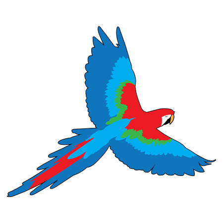 macaw: Flying Macaw Parrot Vector Graphic Illustration