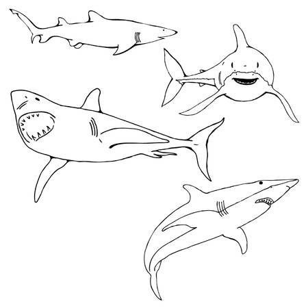 Shark Vector Graphic Stock Illustratie