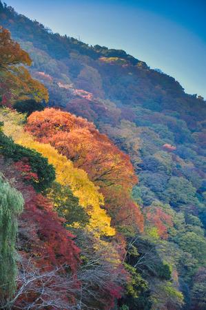 color in: Hojas que cambian de color en Arashiyama, Kyoto, Jap�n Foto de archivo
