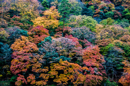 changing color: Leaves changing color in Arashiyama, Kyoto, Japan