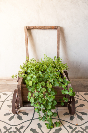 Wooden wheelbarrow plant pot Stock Photo