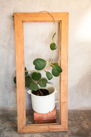 Pot of heart shape plant, Hoya kerrii craib, decorated by a wooden frame
