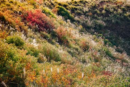 Colorful meadow on top of Mount Wakakusayama, Nara, Japan