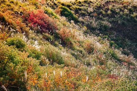 Colorful meadow on top of Mount Wakakusayama, Nara, Japan