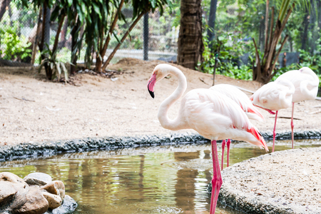 Pink flamingo standing in the water Stock Photo