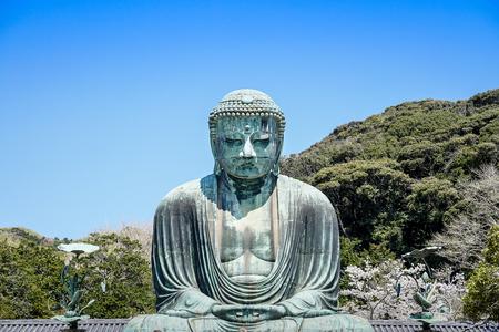 The great buddha, Daibutsu, of Kamakura with cherry blossom, Japan 写真素材