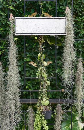 Empty signage hanging with plants decoration Imagens
