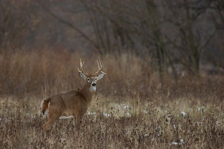 nice buck Stock Photo