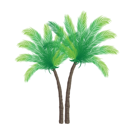 subtropical plants: Palm Trees on White Background | Vector Holiday Design