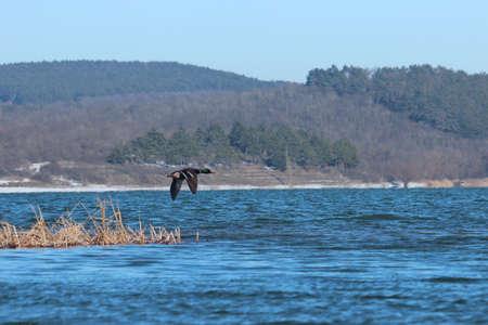 Flying over the lake drake