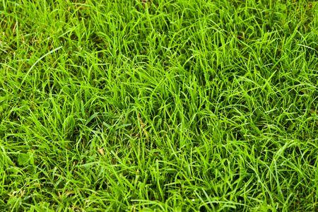 A grass texture, vibrant green