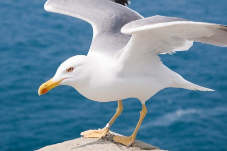 Seagulls are birds in the family Laridae Stock Photo