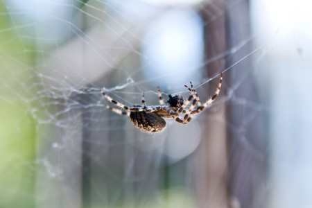 Macro of a spider on its web Stock Photo
