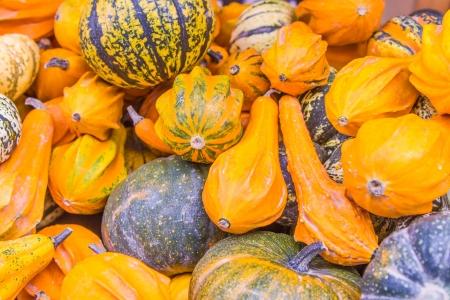 Autumn pumpkins background, yellow, orange and green