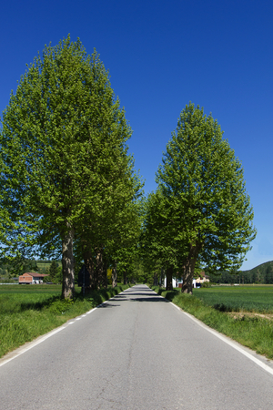 Asphalt road in the countryside on a sunny day