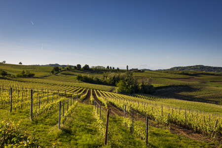 Vineyards on the Hills of Italy in the spring Stock Photo