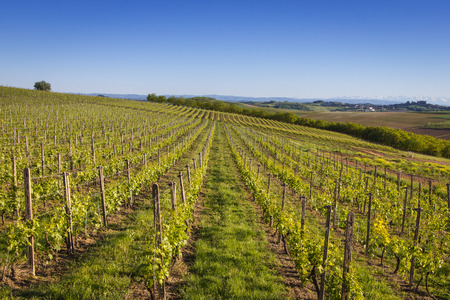 Vineyards on the Hills of Italy under the blue sky Stock Photo