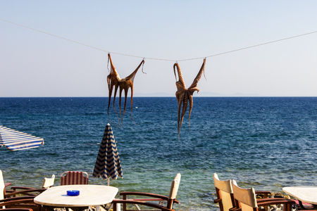 Octopus Drying on the String at the beach restaurant
