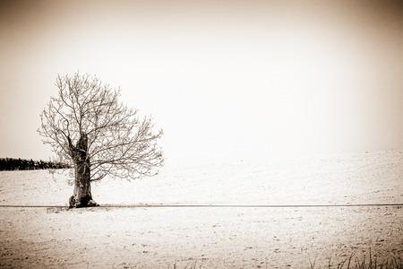 swept: Solitary wind swept Tree in Winter-Scottish Borders Stock Photo