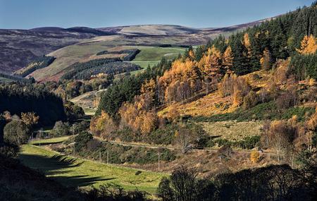 The Tweed Valley, Elibank , Scottish Borders Stock Photo