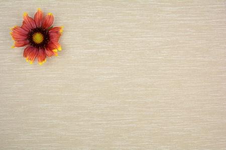 small flower: Small flower