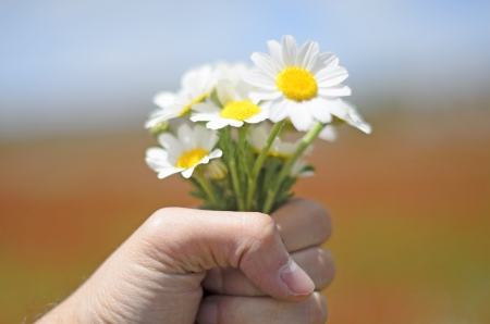 Bouquet of daisies in a hand photo