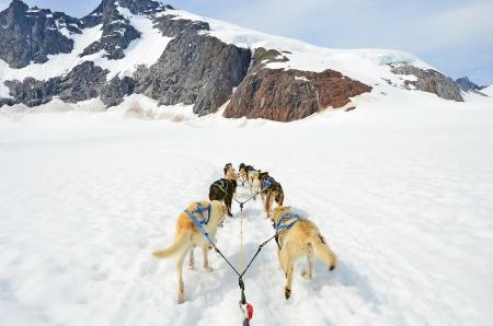 mushing: Dog sled competition