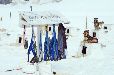 Dog Sledding Harnesses photo