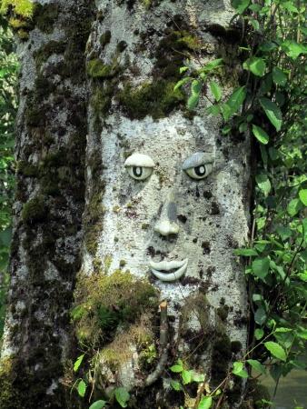 sculpted: Gezicht gebeeldhouwd in een boom