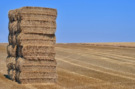 Bundle of straw making a pile