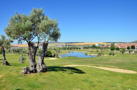 Golf course and tree in the foreground