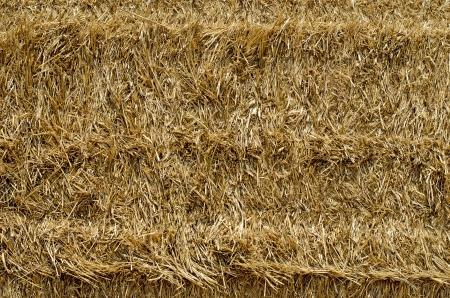 Straw background photo