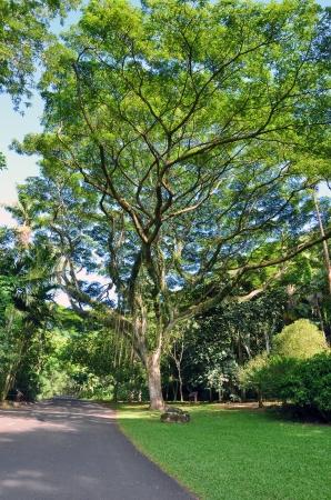 Awesome tree in a hawaiian park