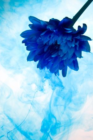 Abstract chrysanthemum  flower on a white background with blue smoke photo