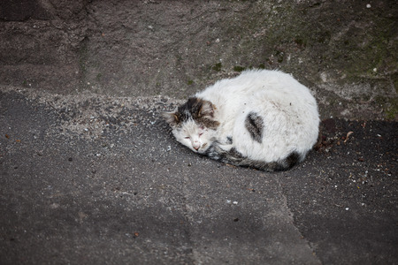 outcast: Homeless hungry cat sleeping on the ground abandoned by people. Poor pet needs a shelter and owner. Stock Photo